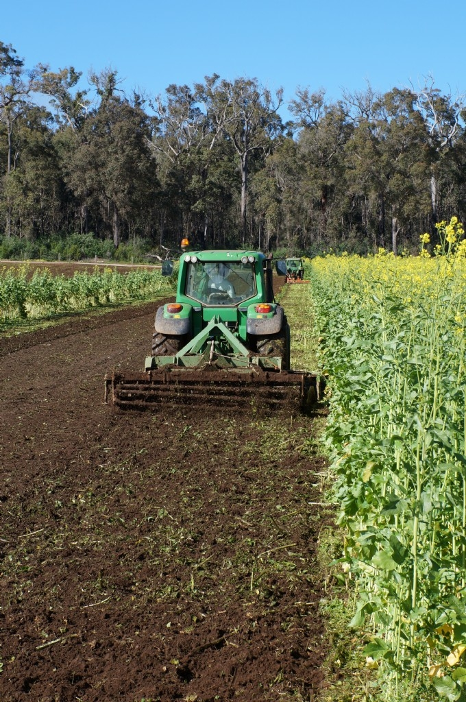 Webinar: Biofumigation cover crops in vegetable production