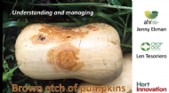 Brown etch on butternut pumpkins - Beauty is more than skin deep