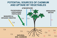 Online information hub for cadmium in agriculture