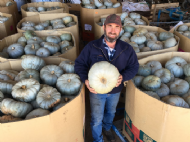 Benefits of cover crops and strip till for pumpkin production – interview with Michael Camenzuli from Bathurst (6 minutes)
