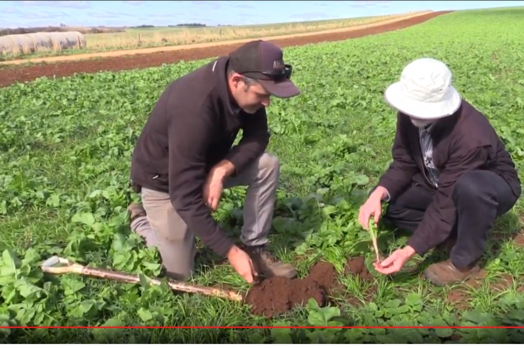 TIA soil health video looks at cover cropping with potato grower James Addison