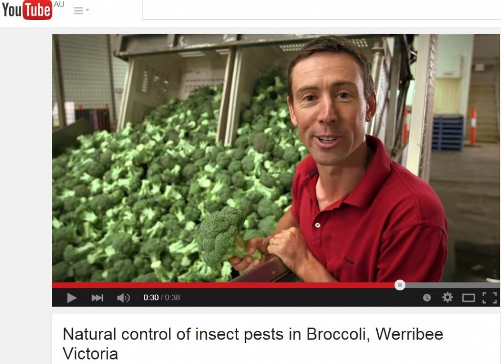 Natural control of insect pests in Broccoli, Werribee