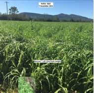 The past, present, and future of the cover crop industry