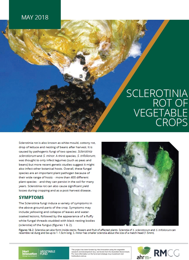 Sclerotinia rot of vegetable crops