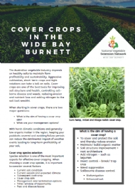 Cover crops in the Wide Bay Burnett