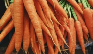 Effect of a coal-based soil amendment on carrots grown in sandy soil
