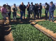 Disease Management Features at International Spinach Conference, Spain