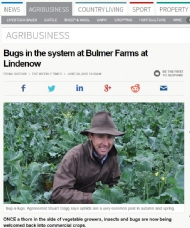 Bugs in the system at Bulmer Farms at Lindenow