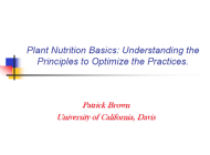 Plant Nutrition Basics: Understanding the Principles to Optimise the Practices