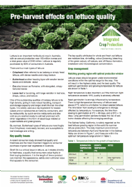 Pre-harvest effects on lettuce quality