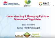 How to control Pythium in vegetable crops with Dr Len Tesoriero