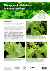 Management of blindness in lettuce seedlings