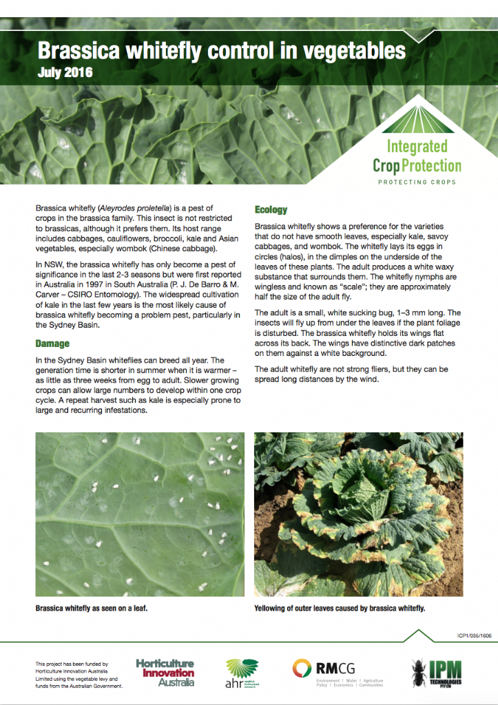 Brassica whitefly control in vegetables