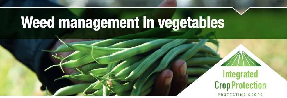 Integrated Weed Management for the Australian Vegetable Industry with  Dr Paul Kristiansen, Dr Kelvin Montagu and Marc Hinderager (webinar recording)