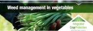 Integrated Weed Management for the Australian Vegetable Industry with  Dr Paul Kristiansen, Dr Kelvin Montagu and Marc Hinderager