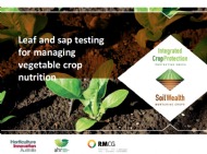 Leaf and sap testing for managing vegetable crop nutrition with Bruce Scott, Doris Blaesing and Gordon Rogers