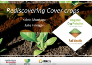 Rediscovering cover crops with Kelvin Montagu