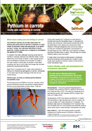 Pythium in carrots: Cavity spot and forking in carrots