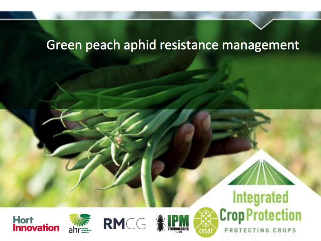 Green peach aphid resistance management with Dr Siobhan de Little (webinar recording)