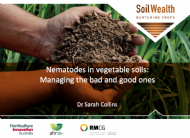 Nematodes in vegetable soils - managing the bad and good ones with Dr Sarah Collins