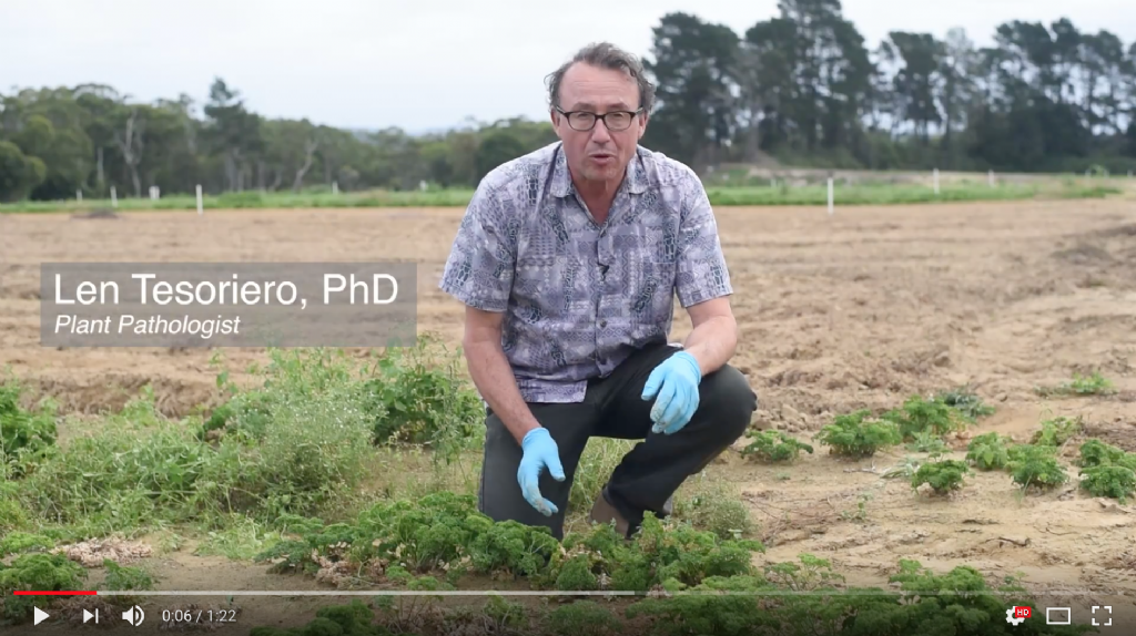 Soil Borne Disease Series: Summer Root Rot