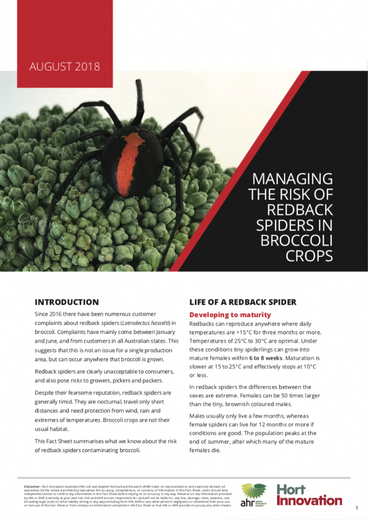 Managing the risk of redback spiders in broccoli crops