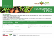 Soil phosphorus - The basics