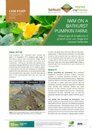 IWM on a Bathurst pumpkin farm: Advantages & drawbacks of ground cover use, tillage and residual herbicides