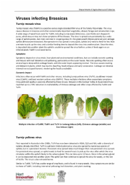 Viruses infecting Brassicas