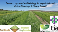 Cover crops and soil biology in vegetable soils