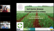 Soilborne disease management in onions
