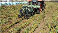 Benefits of a cover crop + strip till combination