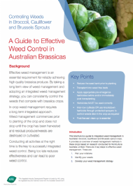 A Guide to Effective Weed Control in Australian Brassicas
