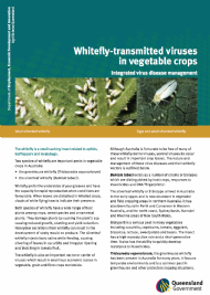Whitefly-transmitted viruses in vegetable crops: Integrated virus disease management