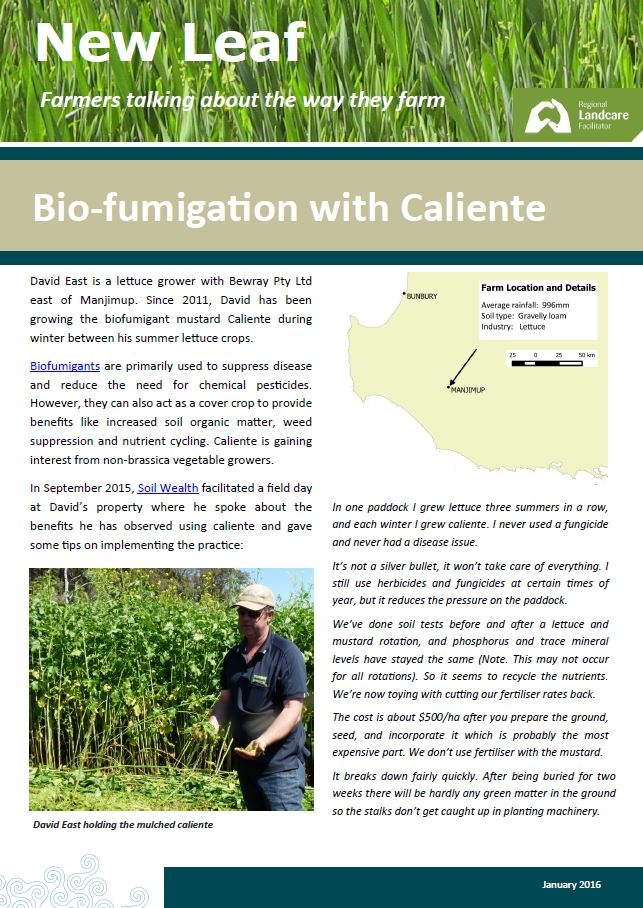 Lettuce grower David East use of biofumigant mustard