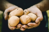 Biosecurity resources for Australian potato growers and industry members