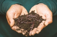 Working with earthworms to boost soil productivity